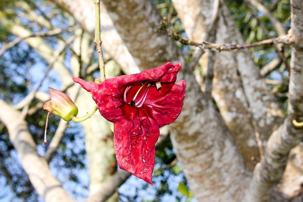 Plant Species Tree Species St Lucia Isimangaliso