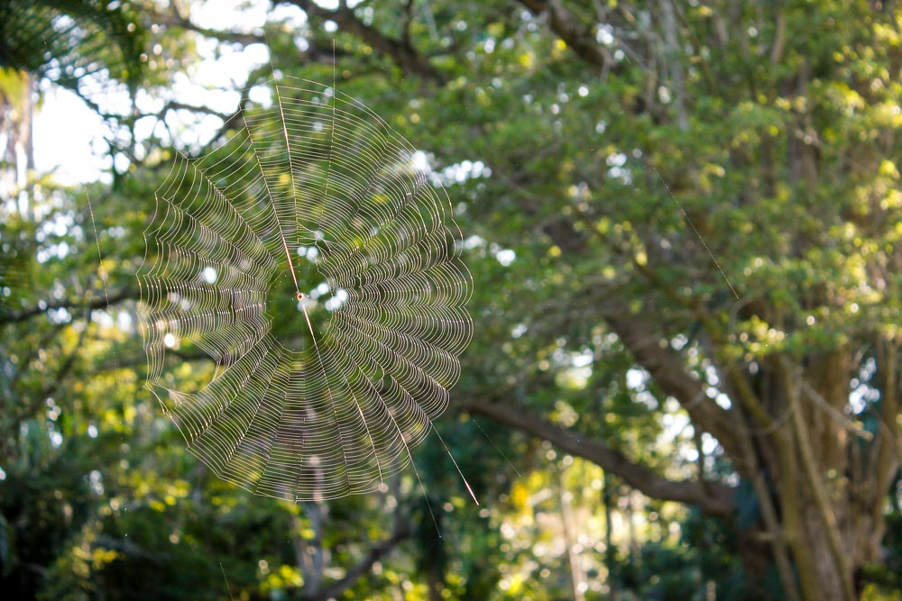 Spider web, St Lucia, KwaZulu-Natal, South Africa, insects, spiders