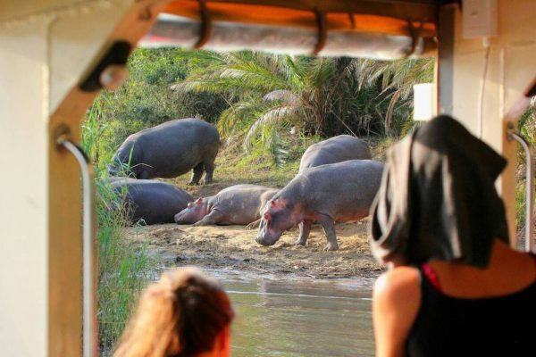 Advantage Cruiser, hippo and crocodile cruise, st lucia, kwazulu-natal, south africa