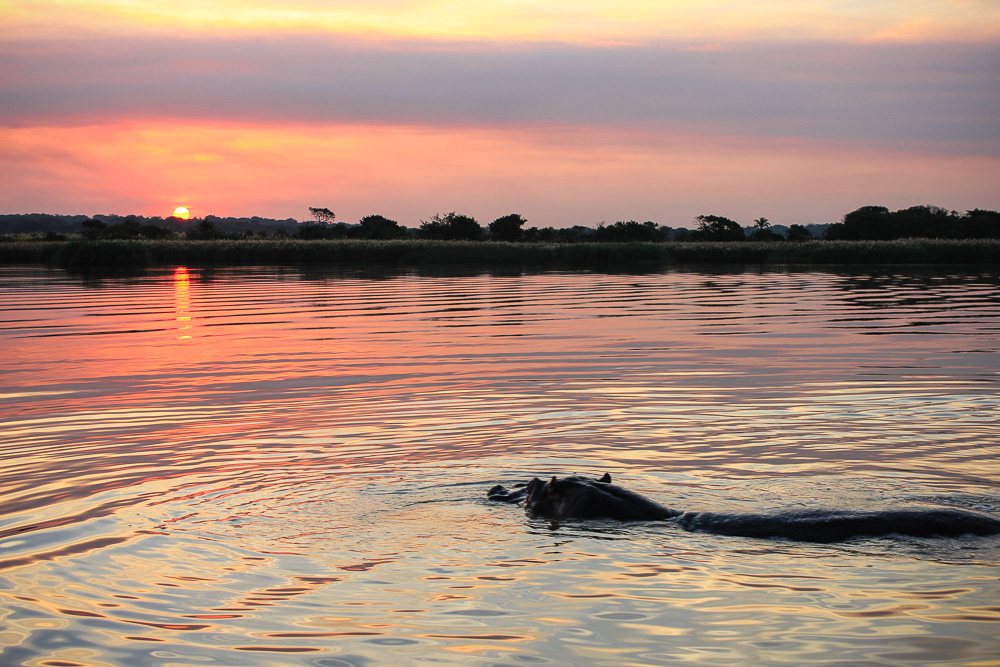Advantage Cruiser, hippo and crocodile cruise, st lucia, kwazulu-natal, south africa