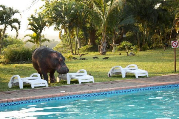 Elephant Lake Hotel St Lucia South Africa