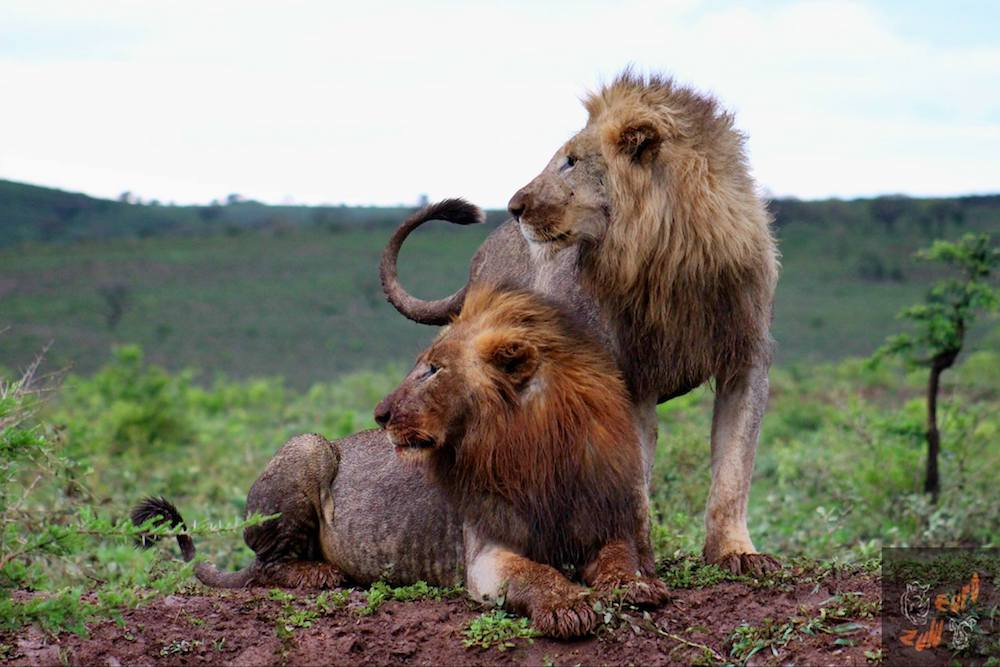 Hluhluwe-Imfolozi Safari